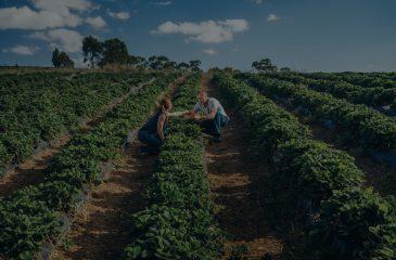 adelaide hills experience beerenberg strawberry farm